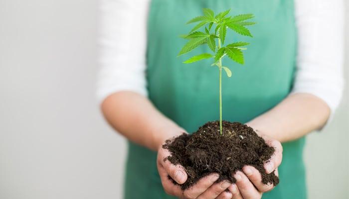 Hanf und Cannabis: verstehen Sie den Unterschied