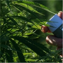 Buy CBD Weed from Switzerland Legally Online