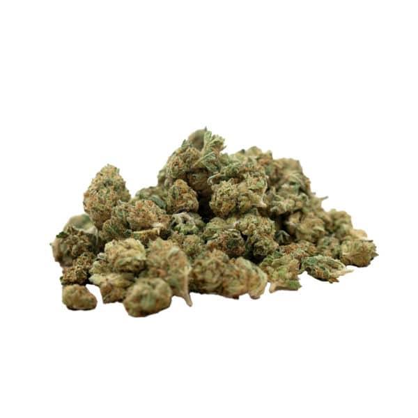 Herba di Berna Harlequin Indoor Minibuds 1, Small Buds